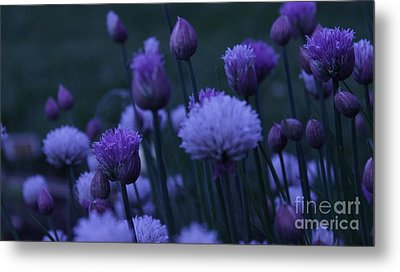 Lavender Twilight Metal Print by Iman Trek