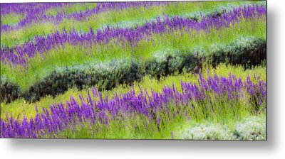Metal Print featuring the photograph Lavender2 by Ryan Weddle