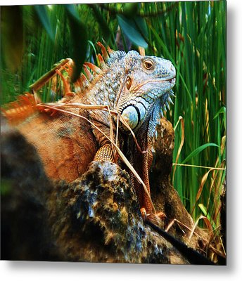 Lazy Lizard Lounging Metal Print by Joy Braverman