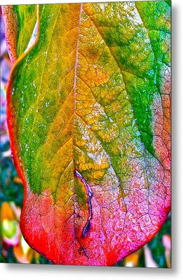 Metal Print featuring the photograph Leaf 2 by Bill Owen