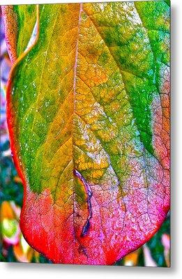 Leaf 2 Metal Print by Bill Owen
