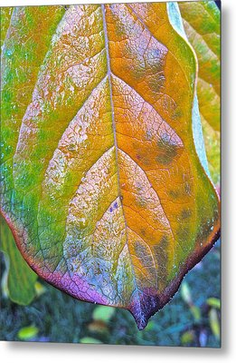 Metal Print featuring the photograph Leaf by Bill Owen