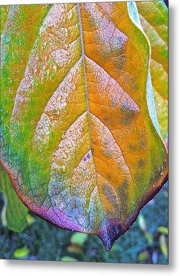 Leaf Metal Print by Bill Owen