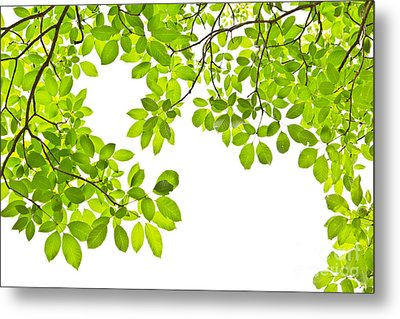 Leaf Isolated On White Background Metal Print