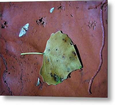 Metal Print featuring the photograph Leaf Libretto by Britt Runyon
