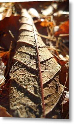 Leaf Litter Metal Print by Michael Standen Smith