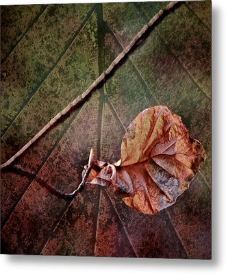Leaf On Leaf Metal Print by Odd Jeppesen