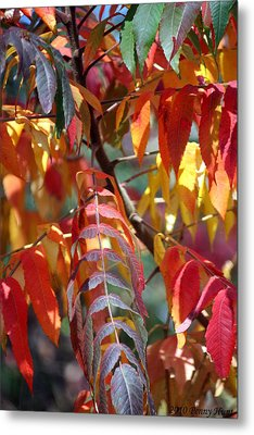Metal Print featuring the photograph Leaf Peeping by Penny Hunt