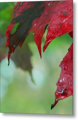 Leaf Shadows Metal Print by Mandi Howard