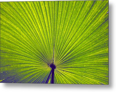 Leaf Metal Print by Sumit Mehndiratta