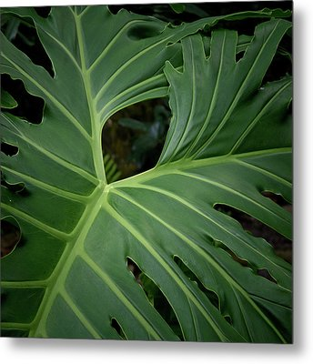 Leaf With Empty Space Metal Print by David Coblitz