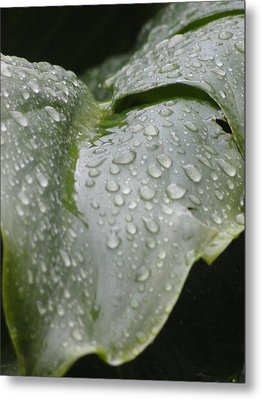 Metal Print featuring the photograph Leafy Greens by Tiffany Erdman