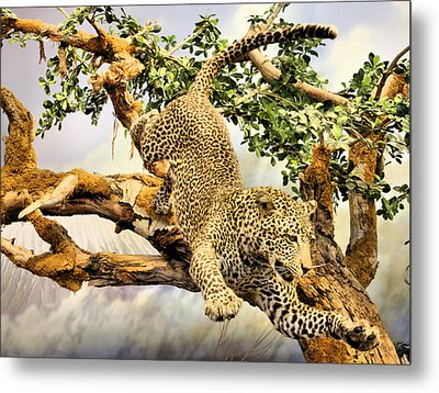 Leaping Leopard Metal Print by Kristin Elmquist