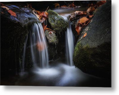 Leaves Along Small Stream 1 Metal Print