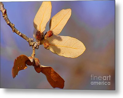 Leaves And Berries Metal Print by Jeremy Linot