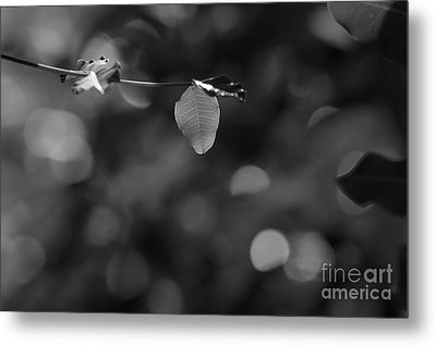 Leaves And Light Metal Print by Dariusz Gudowicz