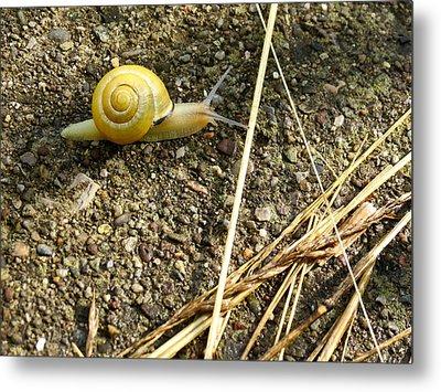 Lemon Snail Metal Print