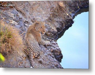 Leopard Metal Print by Arno Pietersen