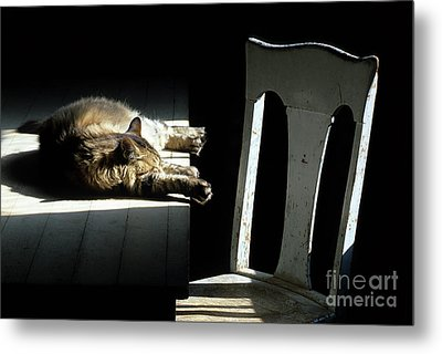 Let Sleeping Cats Lie Metal Print by Bob Christopher