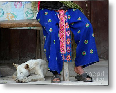 Metal Print featuring the photograph Let Sleeping Dogs Dream by Nola Lee Kelsey