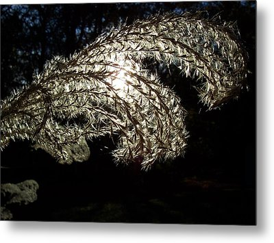 Let The Light Shine Through Metal Print by Chad and Stacey Hall