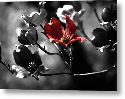 Let There Be Color Metal Print by Bonnie Bruno