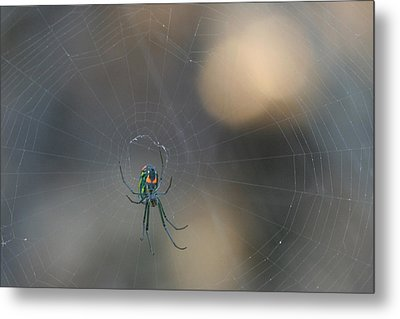 Leucauge Venusta Metal Print by Sean Green