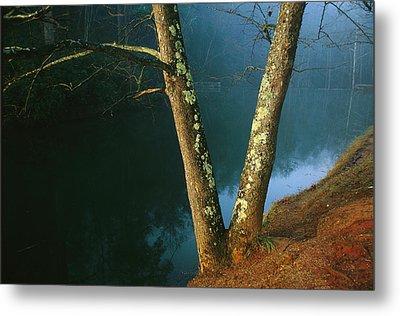 Lichen-covered Dogwood Trees Metal Print by Raymond Gehman
