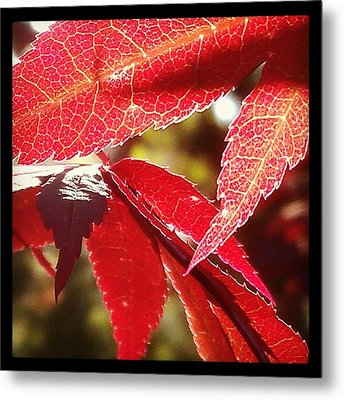 Life In Light Metal Print by Hope Williamson