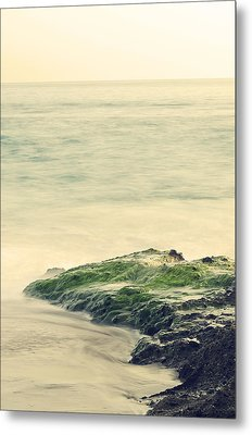Life On The Rocks Metal Print by Clayton Taylor