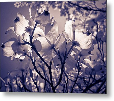 Light And Shadow Play Metal Print by Victoria Ashley