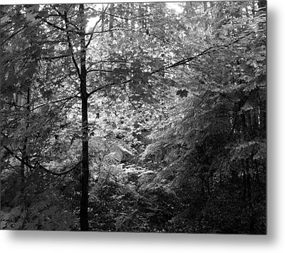 Metal Print featuring the photograph Light In The Woods by Kathleen Grace