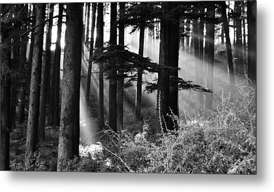 Metal Print featuring the photograph Light Through The Trees by Don Schwartz