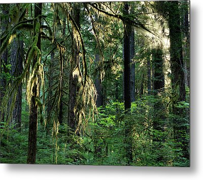 Lighting The Forest Metal Print