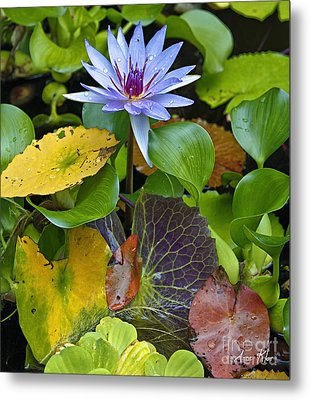 Metal Print featuring the photograph Lilies No. 24 by Anne Klar