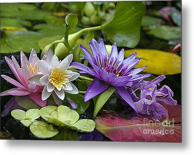 Metal Print featuring the photograph Lilies No. 26 by Anne Klar