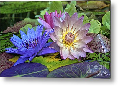Metal Print featuring the photograph Lilies No. 30 by Anne Klar