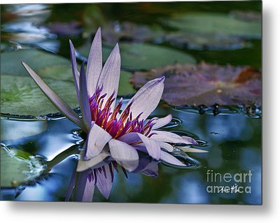 Metal Print featuring the photograph Lilies No. 40 by Anne Klar