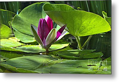 Metal Print featuring the photograph Lilies No. 41 by Anne Klar