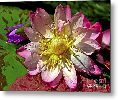 Metal Print featuring the photograph Lilies No. 42 by Anne Klar
