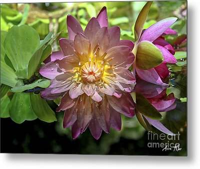 Metal Print featuring the photograph Lilies No. 43 by Anne Klar