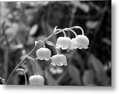 Lilies-of-the-valley Metal Print