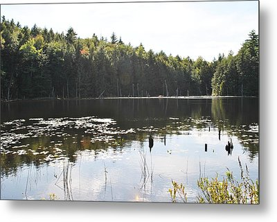 Lilly Pond Metal Print by Mary Fish