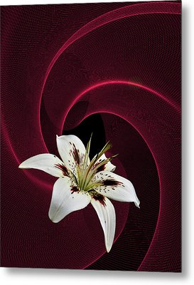 Metal Print featuring the photograph Lilly White by Judy  Johnson