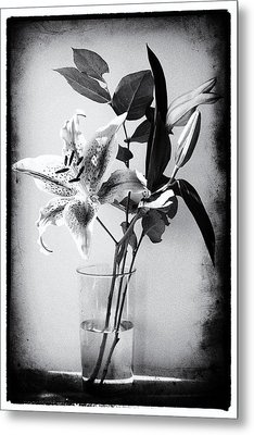 Lily 320bw Metal Print by James Bethanis