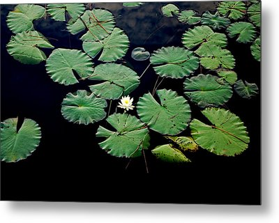 Lily Alone Metal Print by May Photography