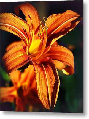 Lily At Sunset Metal Print by Bogdan M Nicolae