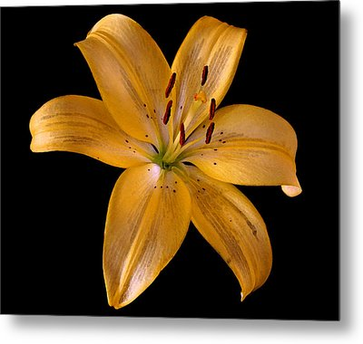 Metal Print featuring the photograph Lily by Karen Harrison