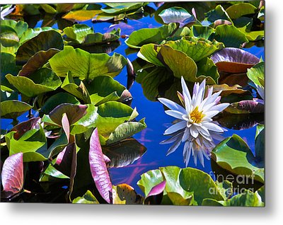 Lily Metal Print by Lawrence Burry