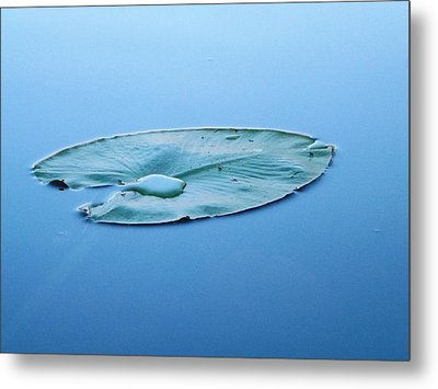 Lily Pad In The Sky Metal Print